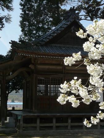 満願寺 しぐれ桜 9