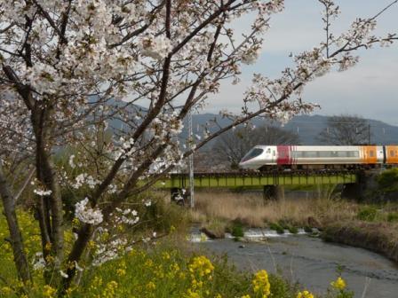 桜・菜の花と 8000系特急電車
