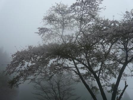 霧の中の桜 2