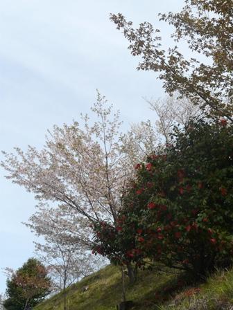 塩ヶ森ふるさと公園 桜 と 椿
