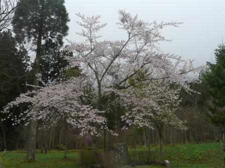 フォレスターハウス 桜 3