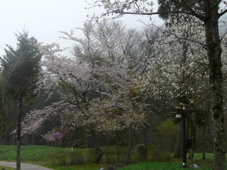 フォレスターハウス 桜 2
