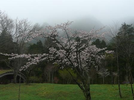 フォレスターハウス 桜 5
