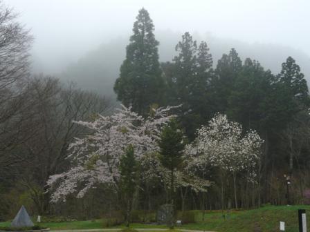 フォレスターハウス 桜 1