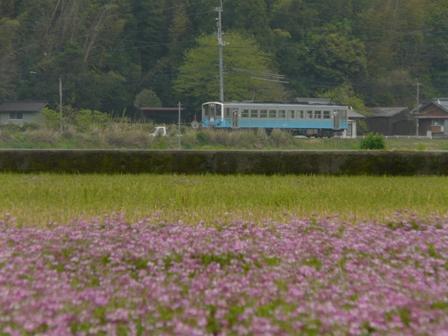 春賀駅付近 レンゲ&キハ54形 3