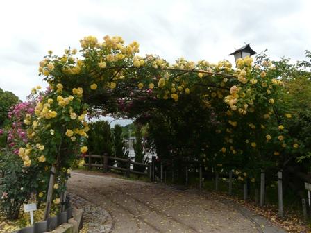 かわら館のバラ バラのアーチ