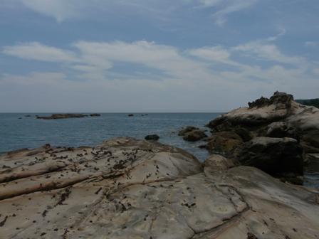 竜串海岸 5