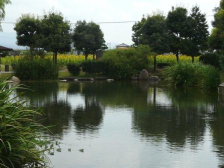 ひょこたん池 と ひまわり