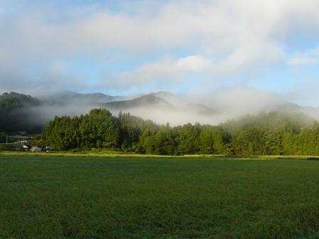 水田と山の霧