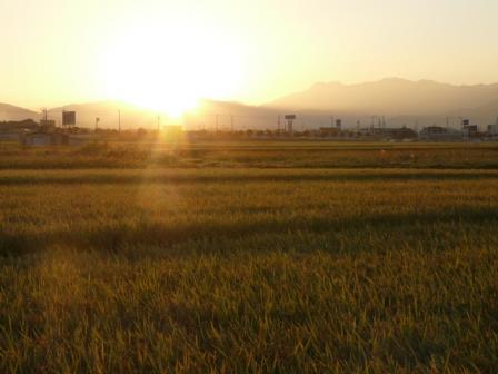 田園の朝景 4