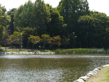 洞峰公園 1