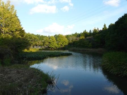 つくば植物園 池