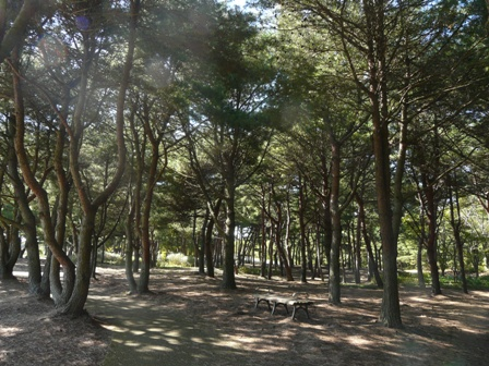 国営ひたち海浜公園 木立