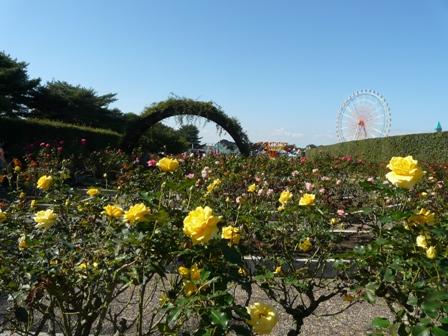 ひたち海浜公園 バラ  ローズガーデン 2