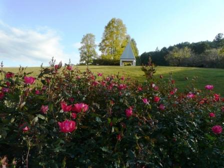 茨城県フラワーパーク バラ 4 (ノックアウト)