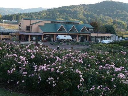 茨城県フラワーパーク バラ 11 (桜霞 1)
