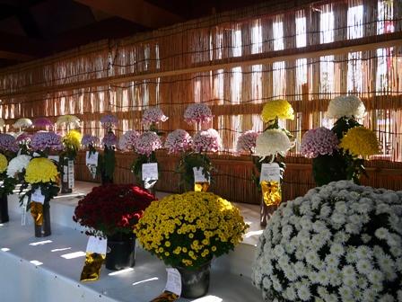 笠間稲荷神社 菊まつり 1