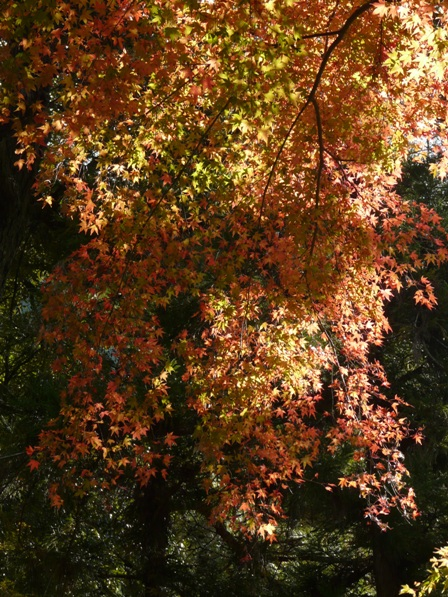 稲荷山公園 紅葉 2