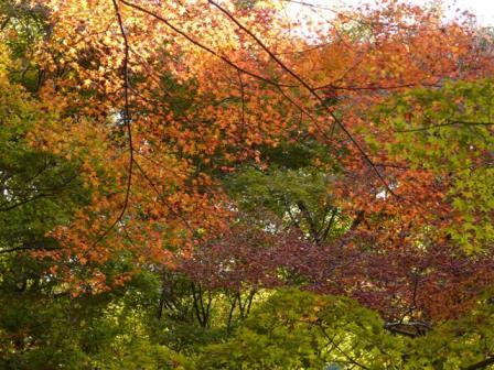 稲荷山公園 紅葉 4