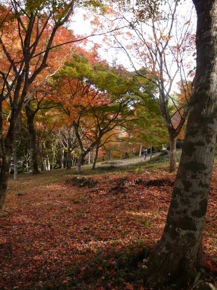 稲荷山公園 紅葉 5