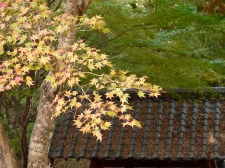 稲荷山公園 紅葉 8