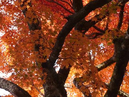稲荷山公園 紅葉 9