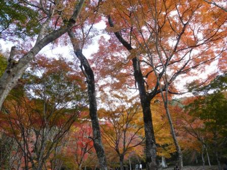 稲荷山公園 紅葉 12