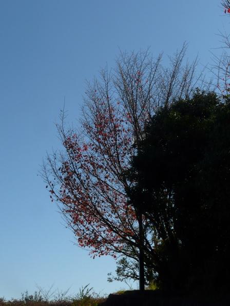 松山総合公園 紅葉 5