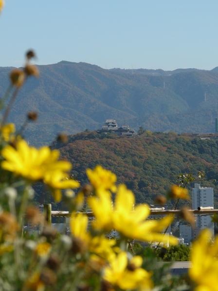 松山総合公園から 4