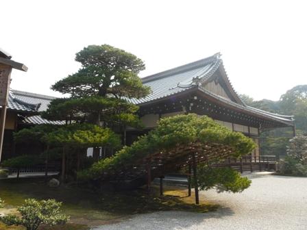 金閣寺 方丈と陸舟の松