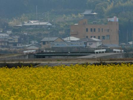 菜の花畑 と 7000系電車