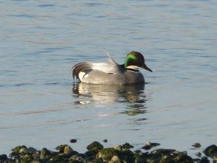 水辺の鳥たち 2