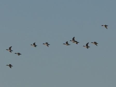 水辺の鳥たち 4