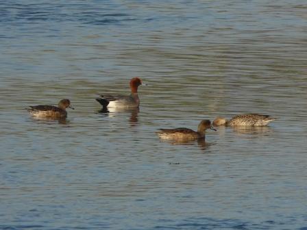 水辺の鳥たち 1