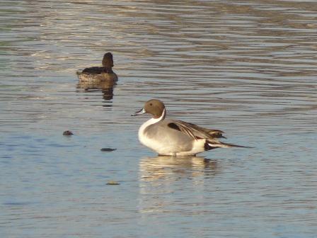 水辺の鳥たち 3