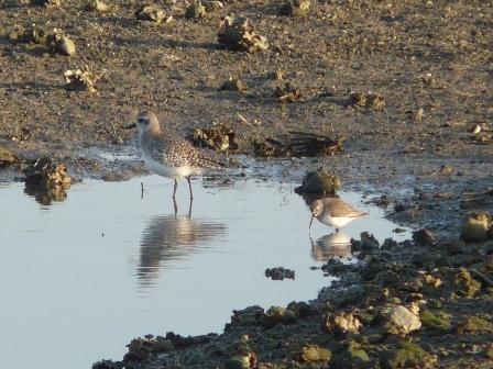水辺の鳥たち 5