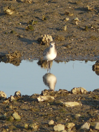 水辺の鳥たち 7