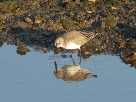 水辺の鳥たち 9