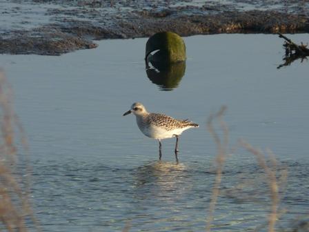 水辺の鳥たち 8
