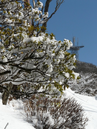 筑波山ケーブルカー 山頂駅から 2
