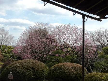 好文亭 15  西塗縁から見た庭園