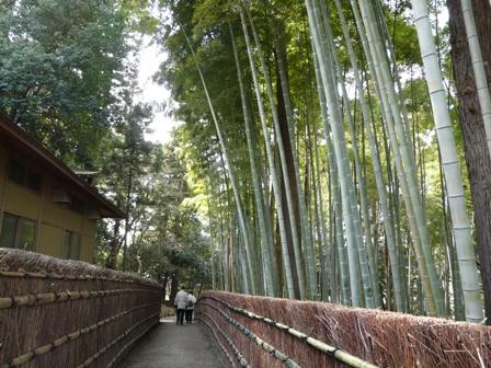 偕楽園の竹 1
