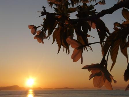 大島桜と夕日 2