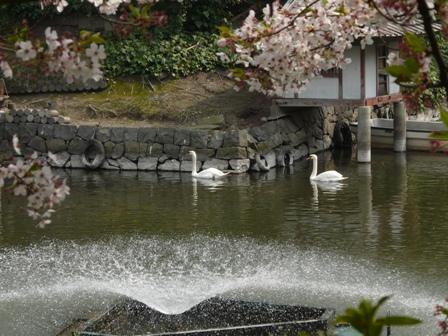 堀之内公園の桜 5