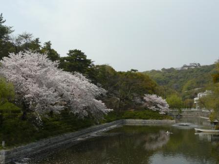 堀之内公園の桜 7