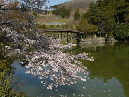 屋根付き橋 弓削神社 3 ソメイヨシノと