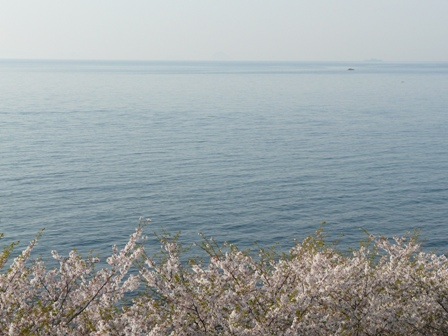 伊予灘と桜