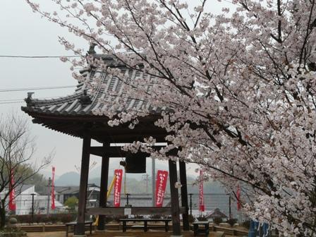 新西法寺桜? 3