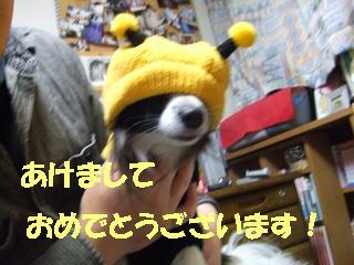 20060103213311.jpg