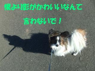 20060107213430.jpg